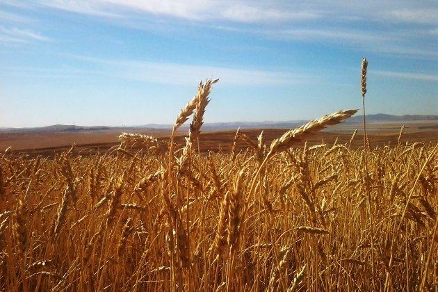 Уже три района Курганской области убрали урожай