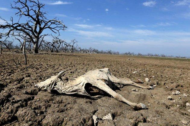 Мёртвое сельское хозяйство