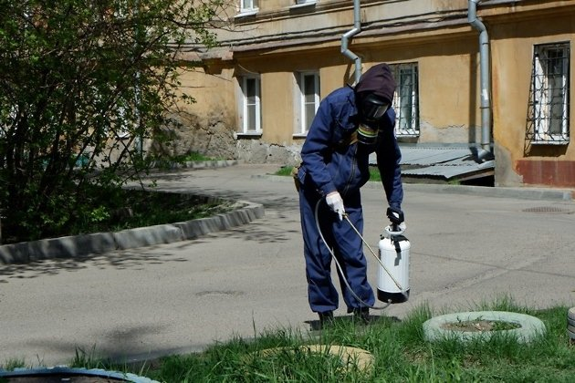 Россельхознадзор выявил рискованное для человека заболевание умёртвого голубя вИркутске