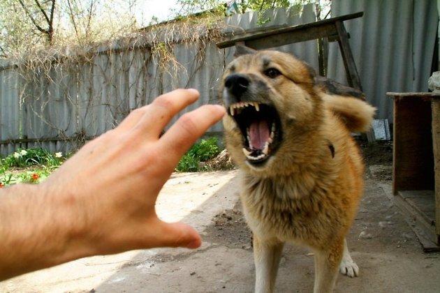 Пенсионерка изАнгарска отсудила 115 тыс. занападение собак