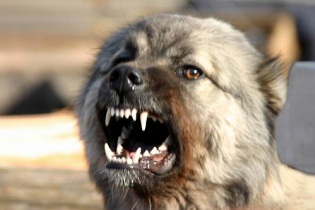 Участковый застрелил агрессивную собаку вУсть-Илимске