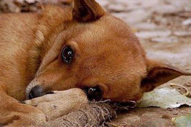 Картинки по запросу бездомная собака