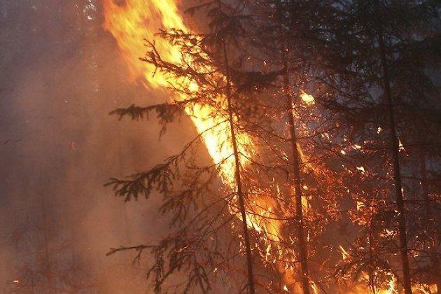 Неменее 13 тыс. гектаров леса объято пламенем вЗабайкалье