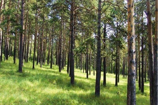 ВКайской роще Иркутска 20мая посадят новые деревья