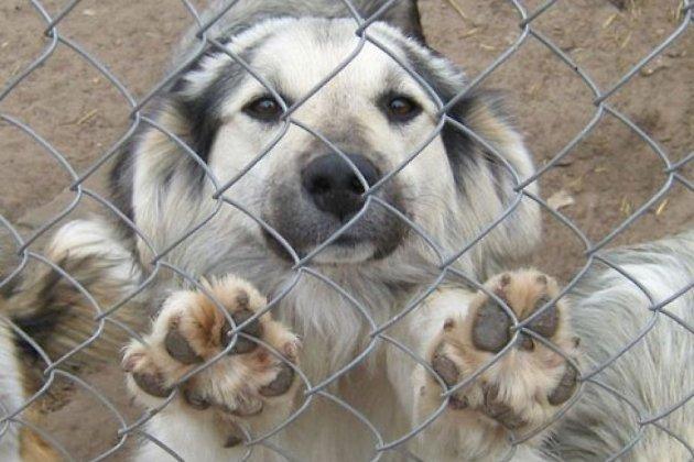 Мурманским ветеринарам рассказали о том, как отлавливают собак в Израиле
