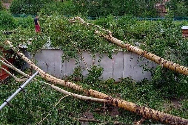 Поваленные деревья в посёлке Кокуй Сретенского района Забайкальского края