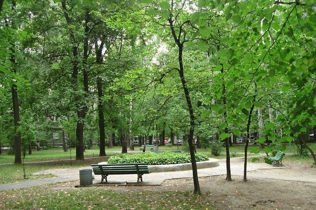 Всквере напересечении улиц Декабрьских Событий иФридриха Энгельса высадили деревья