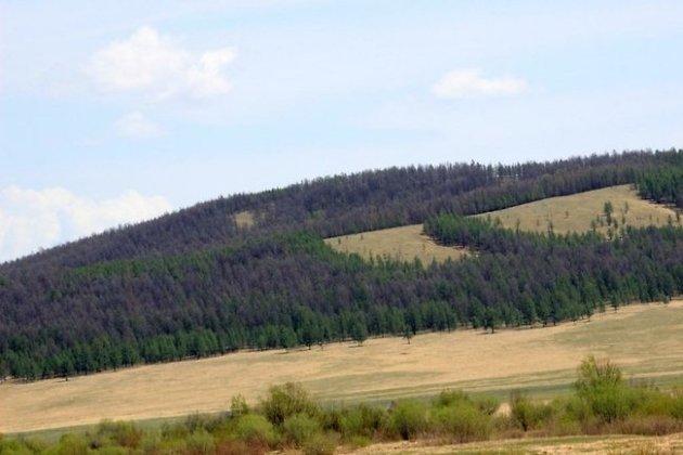 Высохшие участки леса