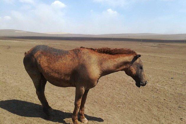 Искалеченный пожаром конь