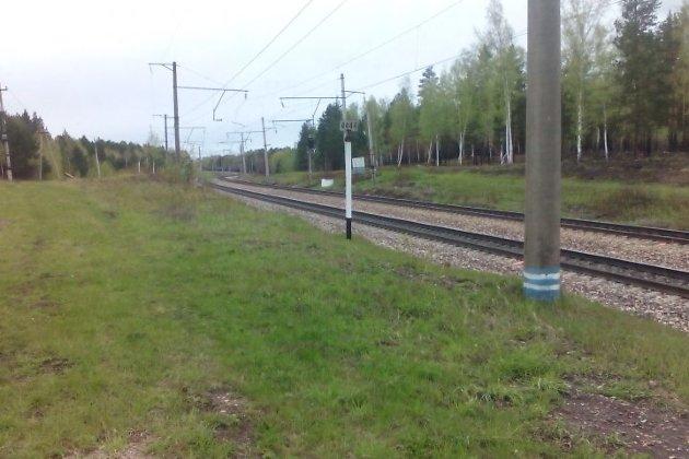 Поезд разрезал морду вышедшего излеса медвежонка