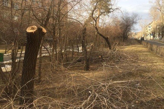 Деревья на улице Горького в Чите