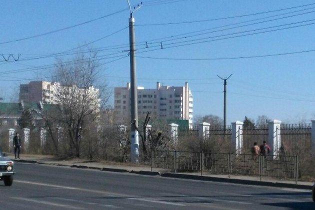 Рубка деревьев на «Локомотиве»