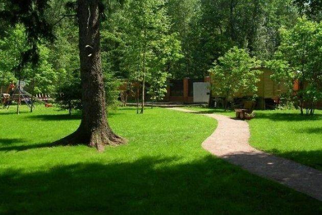 Наулице Карла Маркса вИркутске планируют высадить 100 деревьев