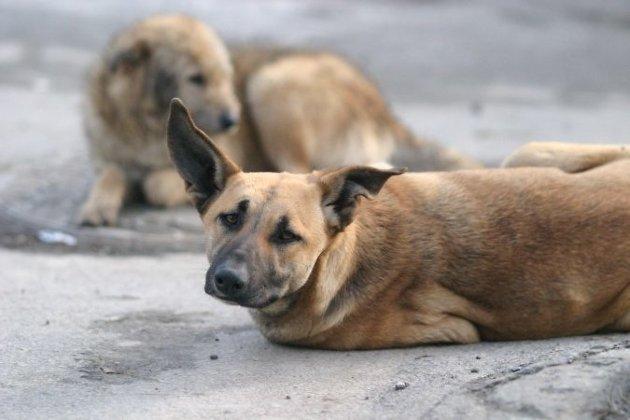 Наотлов бездомных животных Иркутск требует дополнительно 3,6 млн руб.