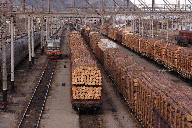 176 тысяч подписей собрали за введение моратория на экспорт круглого леса из Сибири