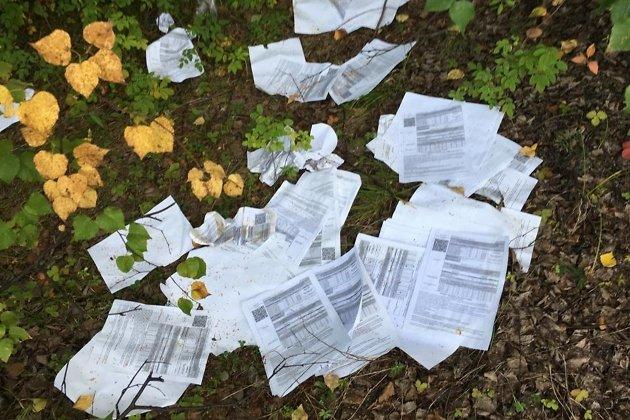 Письма в лесу у Могочи