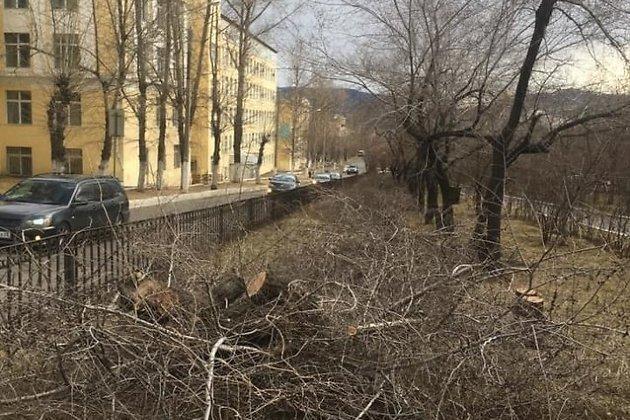 Спиленная аллея на улице Горького