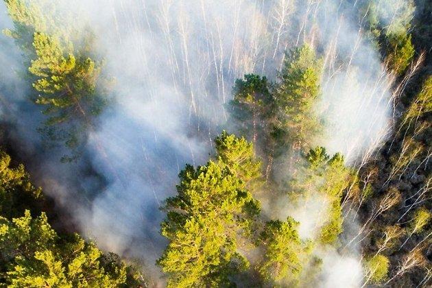 Томская область готова ксезону лесных пожаров— руководитель Минприроды