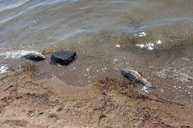 Мёртвая рыба в Кеноне