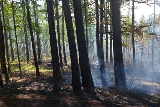 Пожар в Молоковке 6 июня