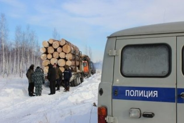 Незаконная рубка сосен в Иркутском районе