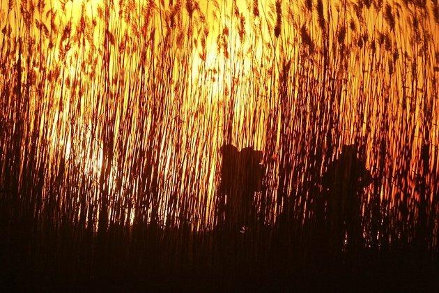 Завыходные площадь лесных пожаров вПриангарье возросла втри раза