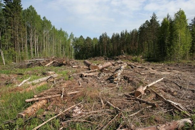 Жительница Иркутской области стала главным фигурантом дела омасштабной незаконной заготовке древесины