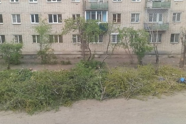 Обрезка деревьев на 2-й Верхневокзальной в Чите