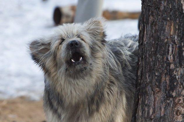 Мужчина вИркутске скончался в клинике из-за воспаления раны отукуса собаки