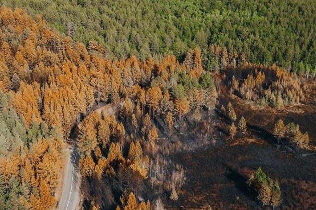 Сгоревший лес на Молоковке