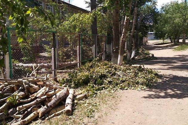 Ветви обрезанных тополей на КСК