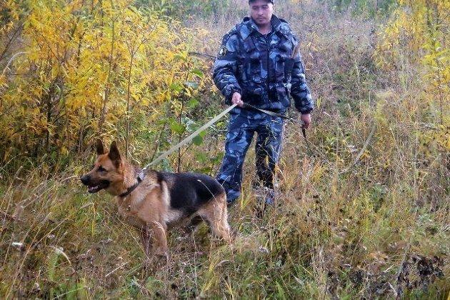 ВИркутской области найден труп 64-летнего грибника, пропавшего накануне