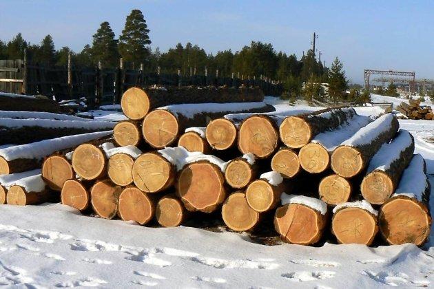 Иркутская область доконца года реализует пилотный проект поучету заготовленной древесины