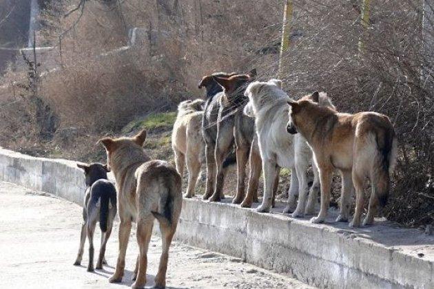 ВАнгарске дворник спасла подростка отнапавшей нанего стаи бродячих собак