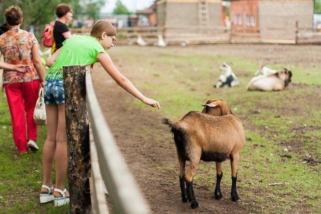 Загон для коз в зоопитомнике