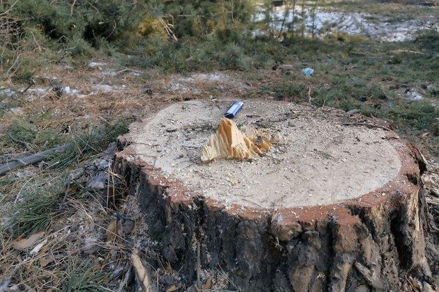 Место вырубки леса в Атамановке