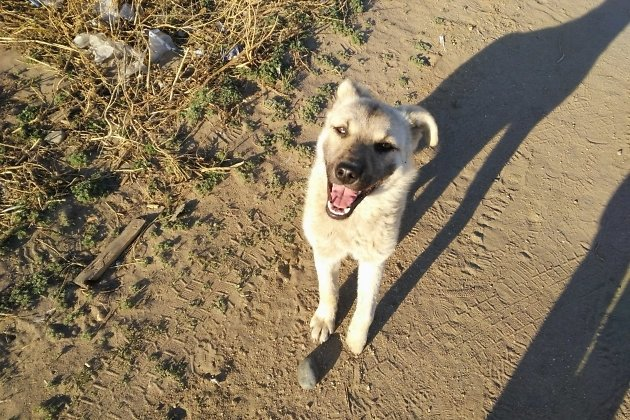 Самая дружелюбная собака нашего маршрута