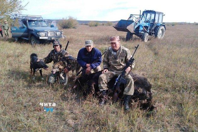 Убитый 1 октября в Дульдургинском районе медведь