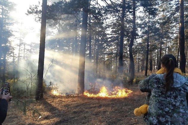 Возгорание травы в лесном массиве в Сосновом бору