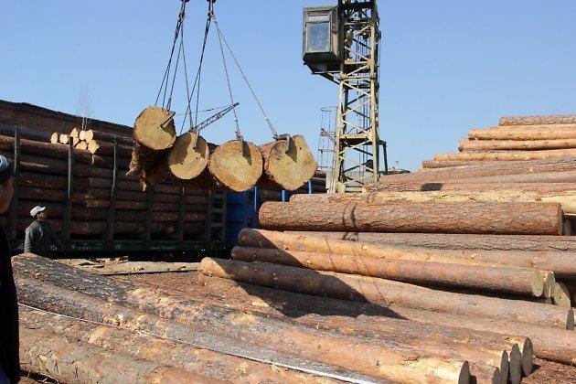 ИзУсольского района нелегально вывезли заграницу древесину на5 млн руб.