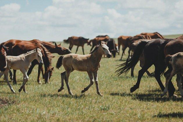 Поголовье скота в хозяйствах Краснокаменского района может снизиться из-за засухи. Фермеры опасаются, что животных нечем будет кормить.