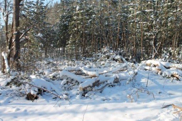 ВИркутской области депутата осудили за нелегальные вырубки леса