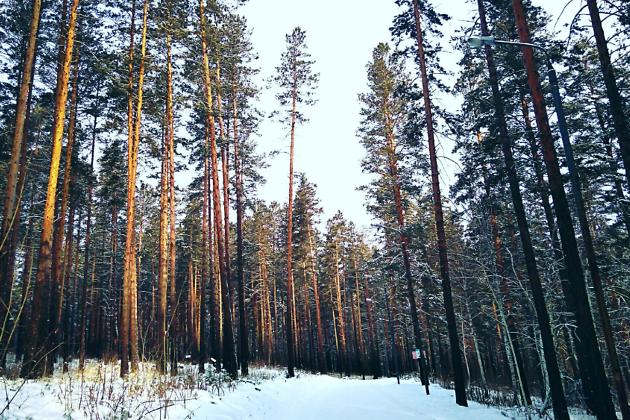 Лыжная трасса на базе «Динамо»