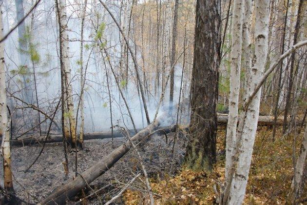 ВИркутской области потушено восемь лесных пожаров
