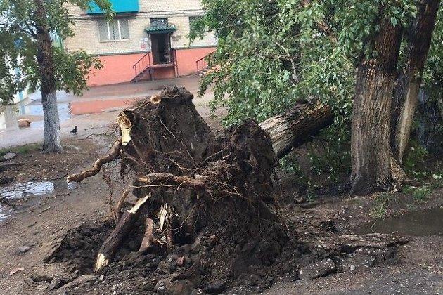 Поваленное дерево на Ползунова в районе Зенитки
