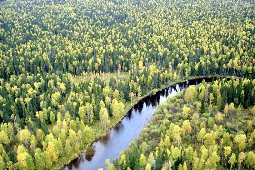 Суд обязал «Группу «Илим» восстановить вырубленный лес в заказнике «Эдучанский»
