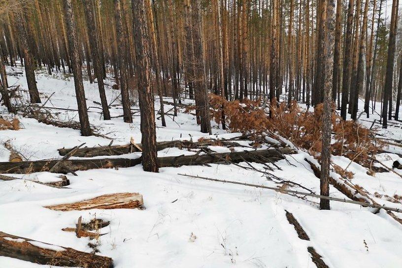 Забайкалье получит 330 млн р. на сохранение лесов - в 2 раза больше, чем в 2020 году