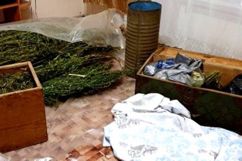 Марихуана в россии сегодня как определить прущую марихуану