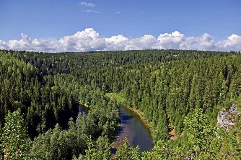 Суд запретил незаконную вырубку 73 тысяч гектаров защитных лесов в Усть-Илимском районе